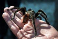 К чему видеть паука на собственной руке