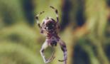 К чему видеть паука, спускающегося вниз по паутине