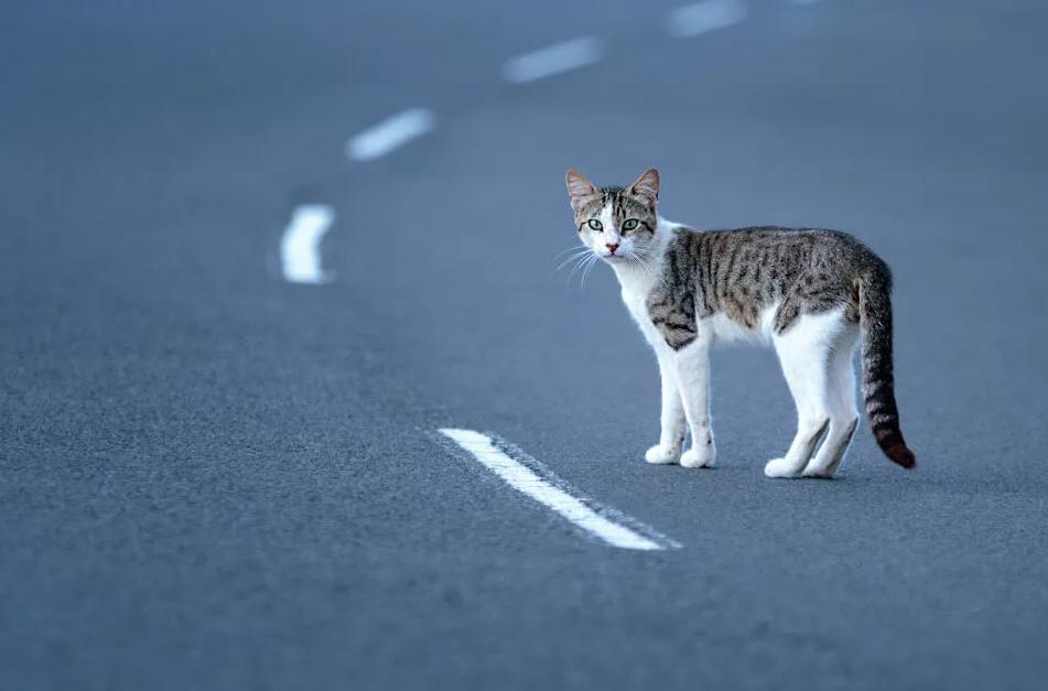 К чему уходят кошки из дома и почему они не возвращаются