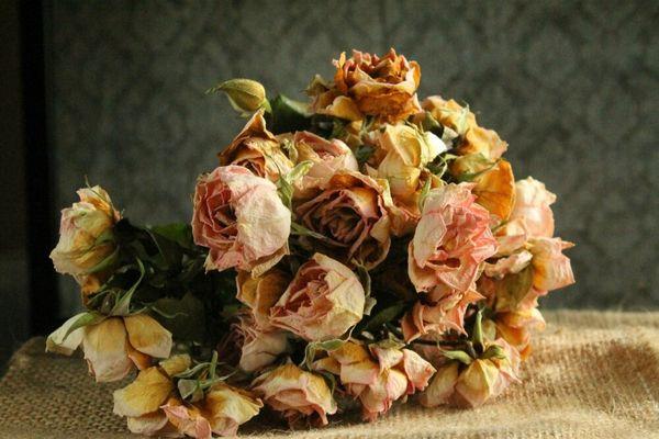 Сухие цветы в доме: хорошо или плохо
