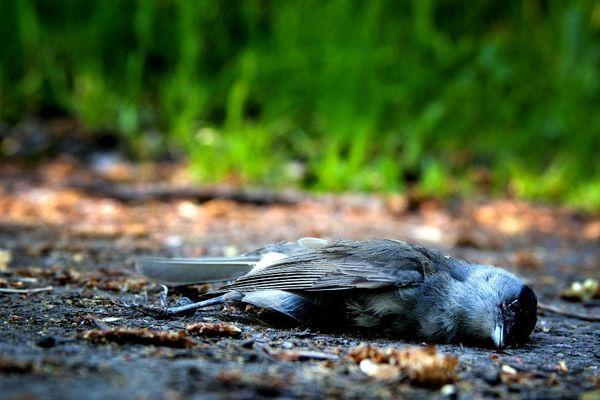 увидеть мертвую птицу на улице примета