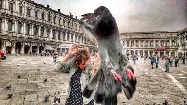 Почему голубь пролетая задевает крылом голову или лицо и как растолковать примету