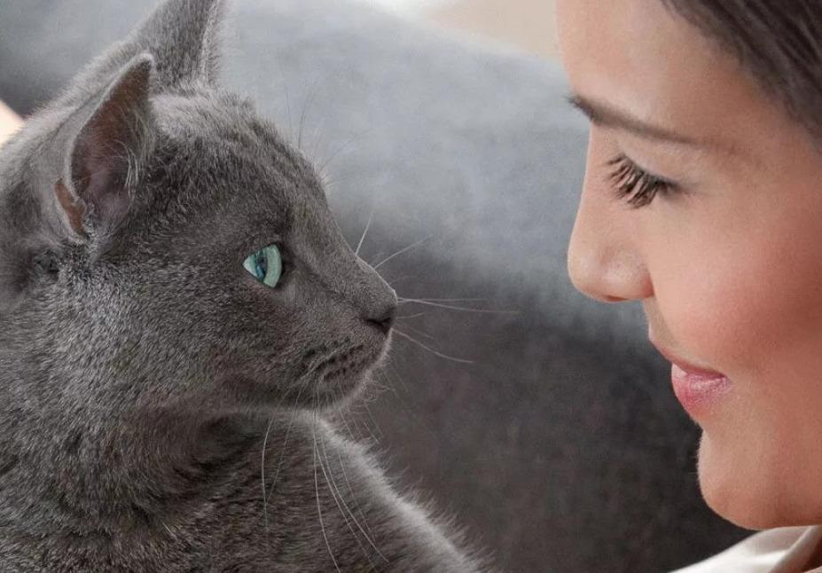 Почему нельзя людям смотреть в глаза кошке