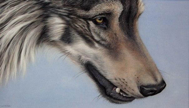 Почему волки гонятся за мной