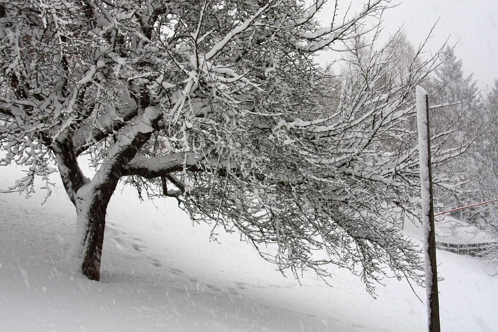 Какой будет следующая зима